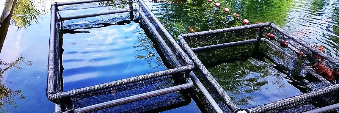 Fischgehege im Einsatz
