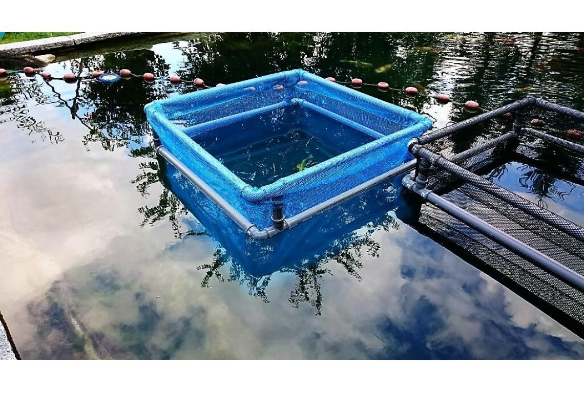 Gehege mit Springschutzrahmen