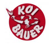 Koi Bauer